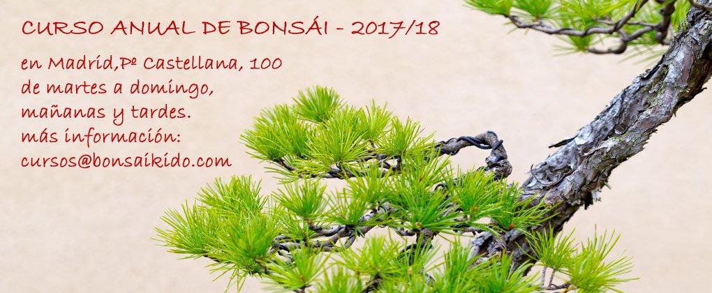 Curso anual de Bonsai - Escuela de Bonsai