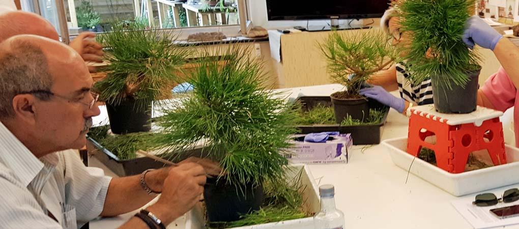 Modelado de pinos Bonsai